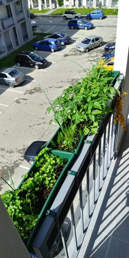 gradina balcon 1