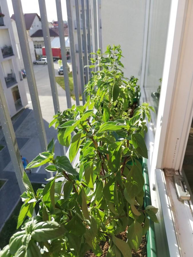 gradina balcon 2