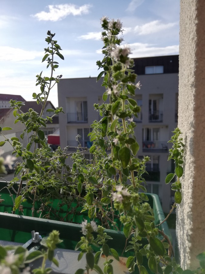 gradina balcon 3