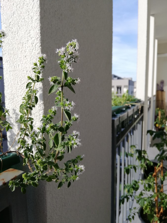 gradina balcon 4