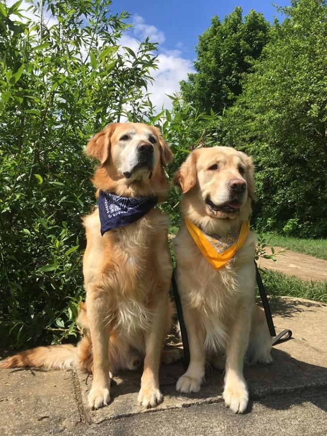 sursa: Asociația Incluziv - Câini De Terapie Sibiu