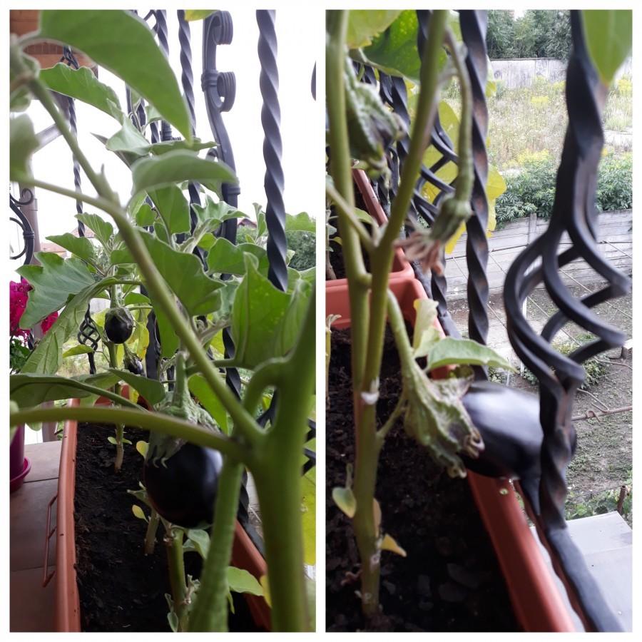 În locul florilor care să blocheze accesul fetiței ei la balustradă, Dana a ales să crească legume