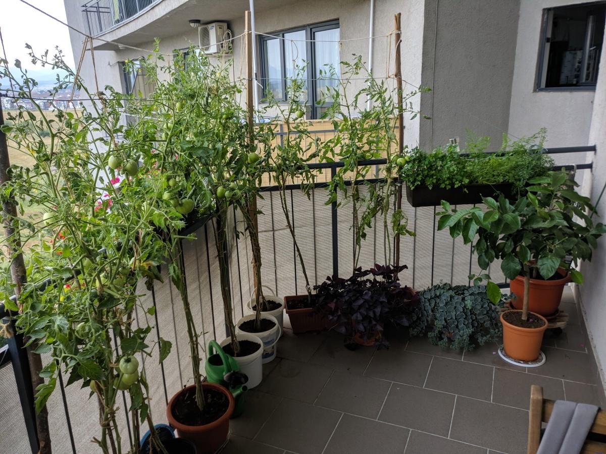 Grădina din balconul Ileanei Sterian
