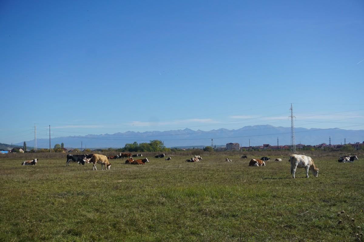 teren vaci 3