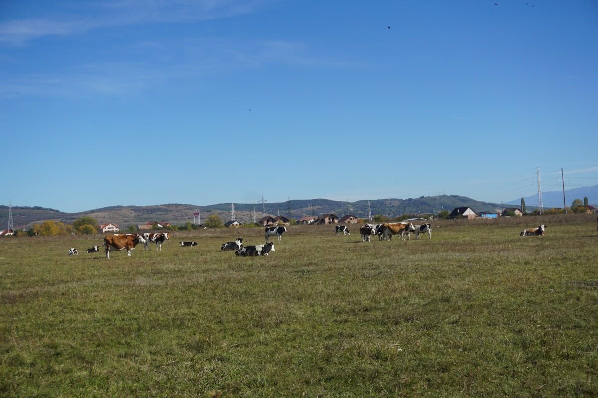 teren vaci 4