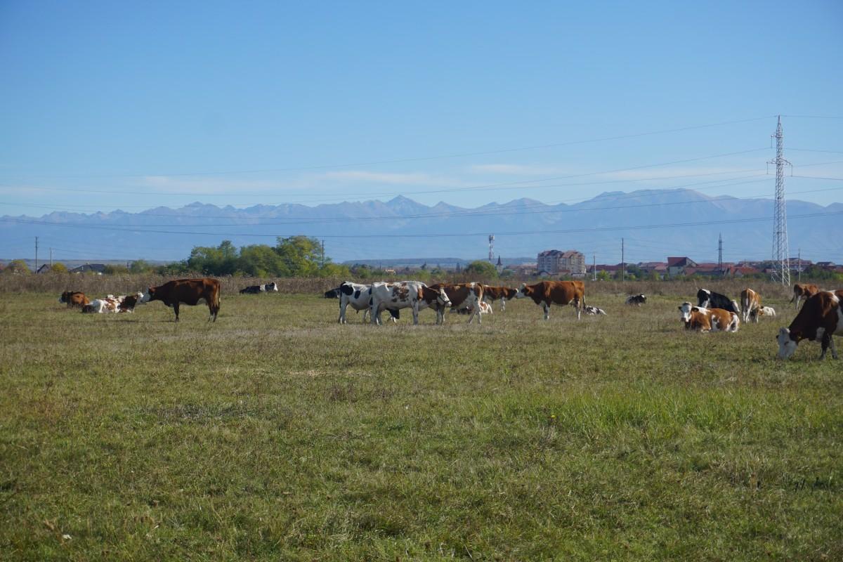 teren vaci 6