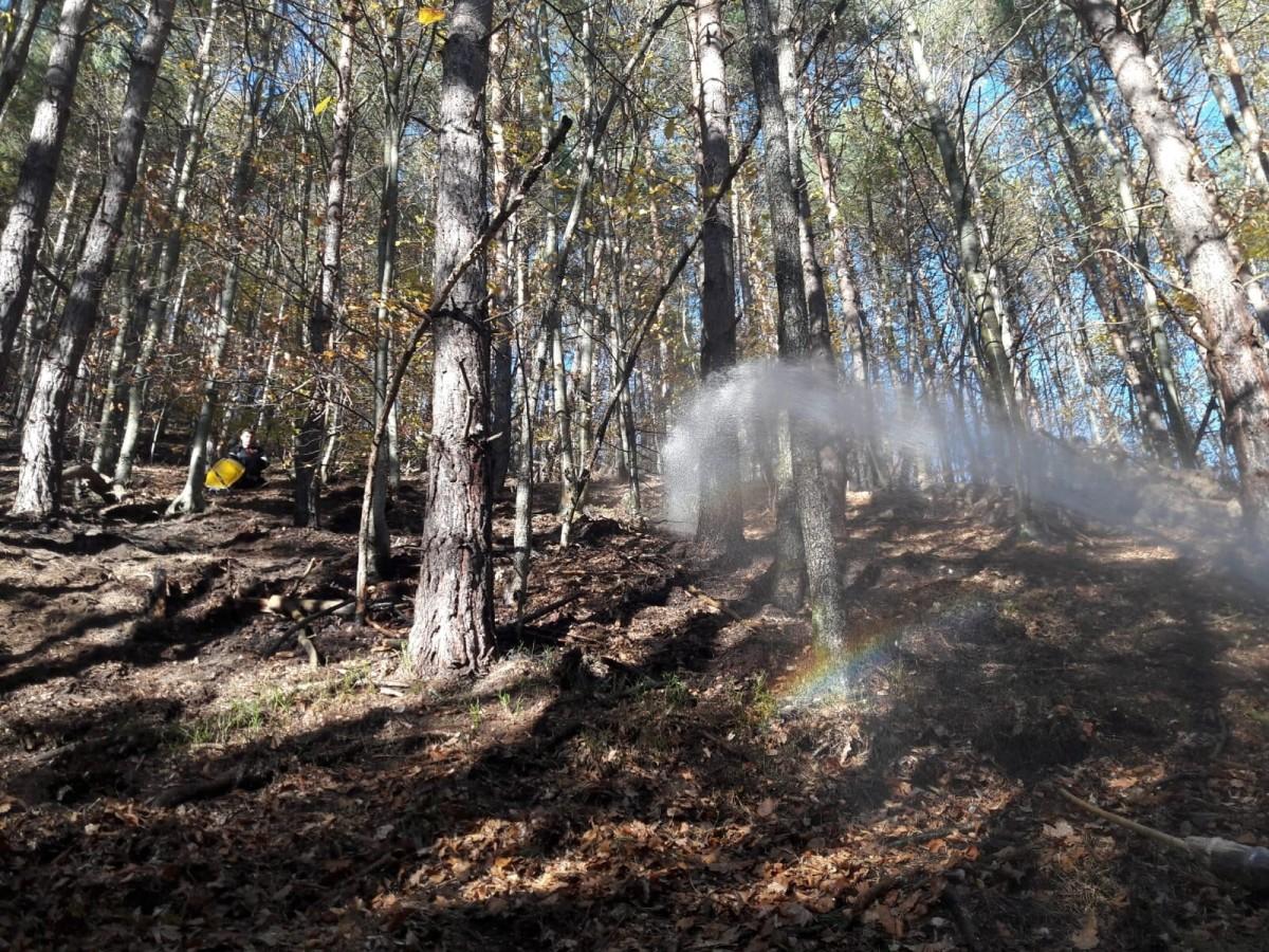 incendiu 2 pădurea măgura 23jfif