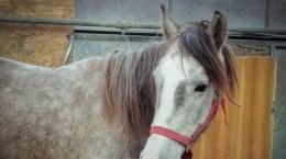 cal din cristian salvat (2)