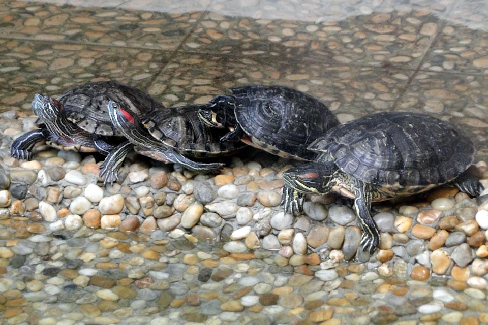 sursă: Grădina Zoologică Sibiu