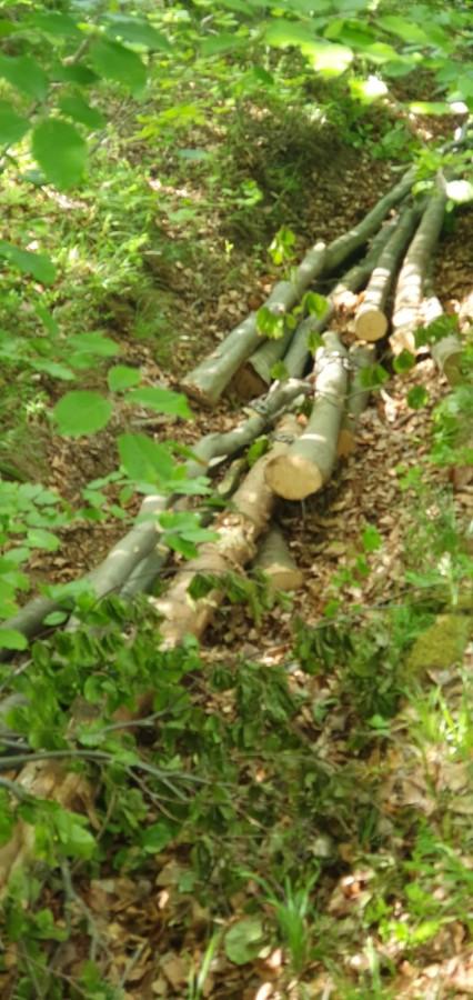 copaci taiati padure3