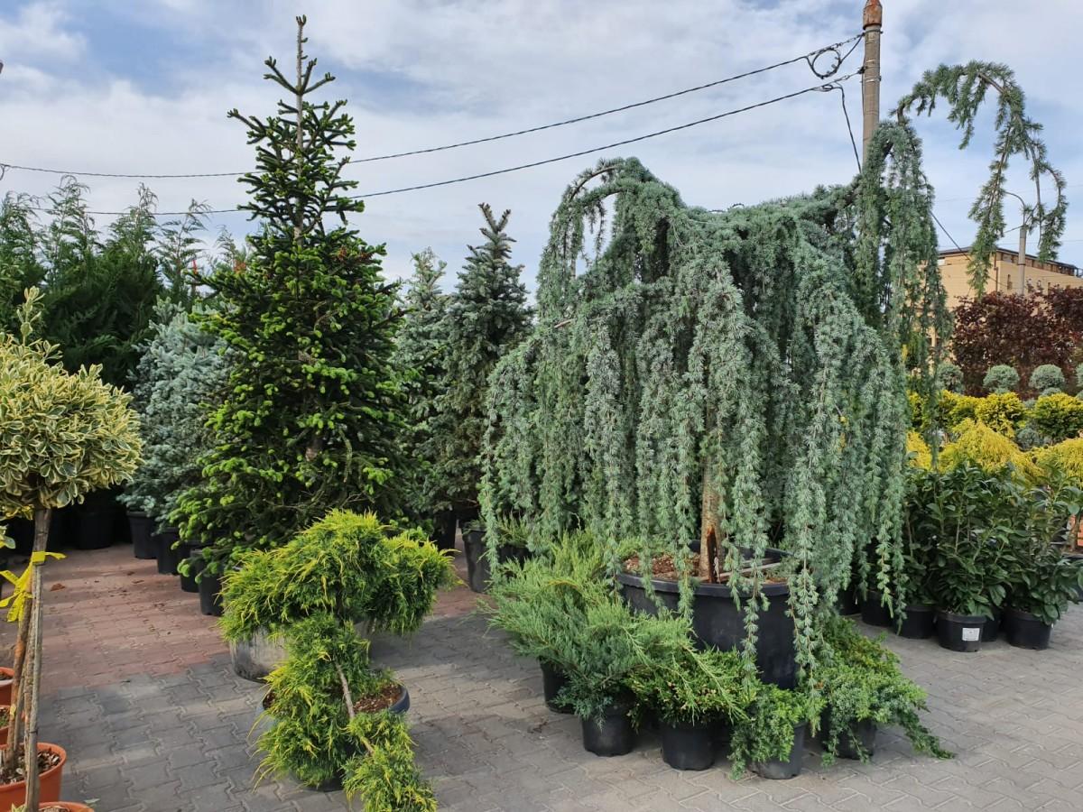 garden center1