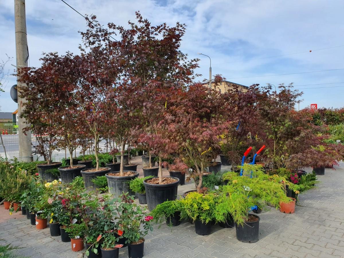 garden center2