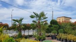 garden center3