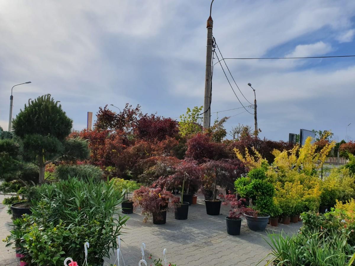 garden center5