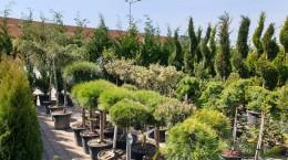 garden center6