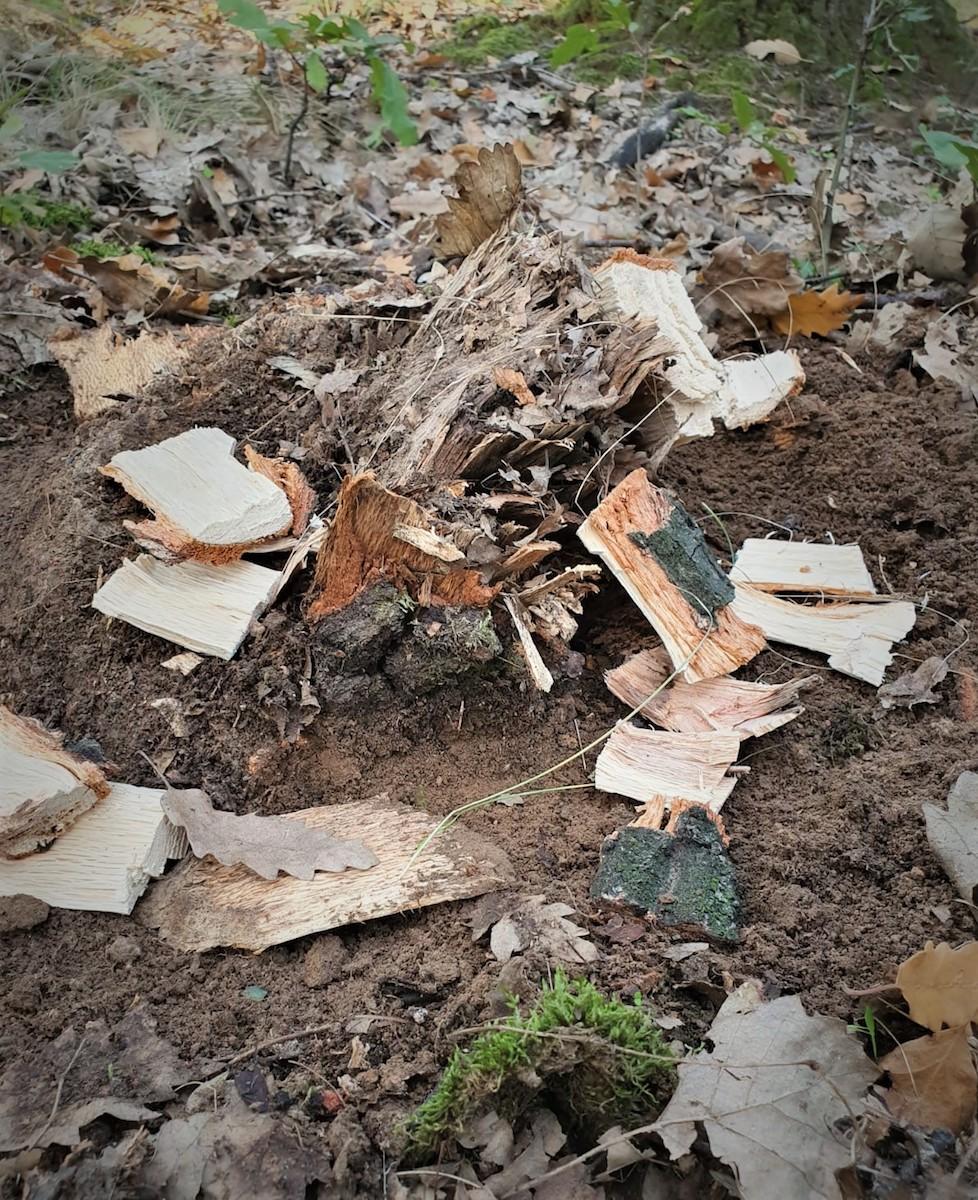 O nouă agresiune la adresa personalului silvic. Un angajat al Direcției Silvice Dolj a fost agresat de o persoană surprinsă în timp ce tăia ilegal lemne