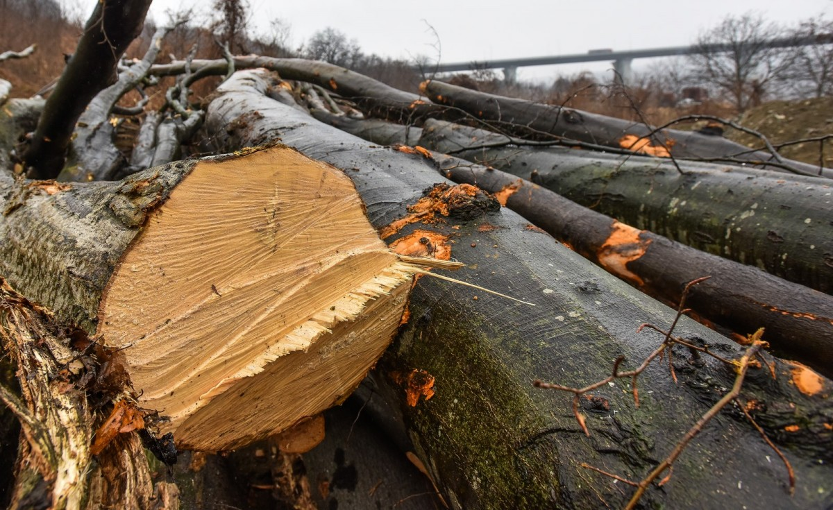 Un bărbat a surprins hoții în timp ce-i furau lemnul de pe proprietate