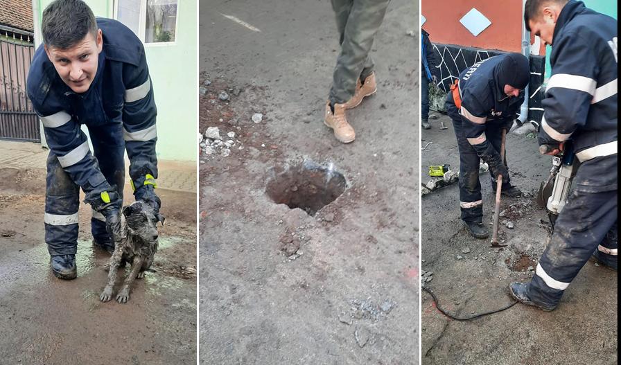 Cei de la ISU Sibiu au salvat un cățel blocat într-un canal pluvial