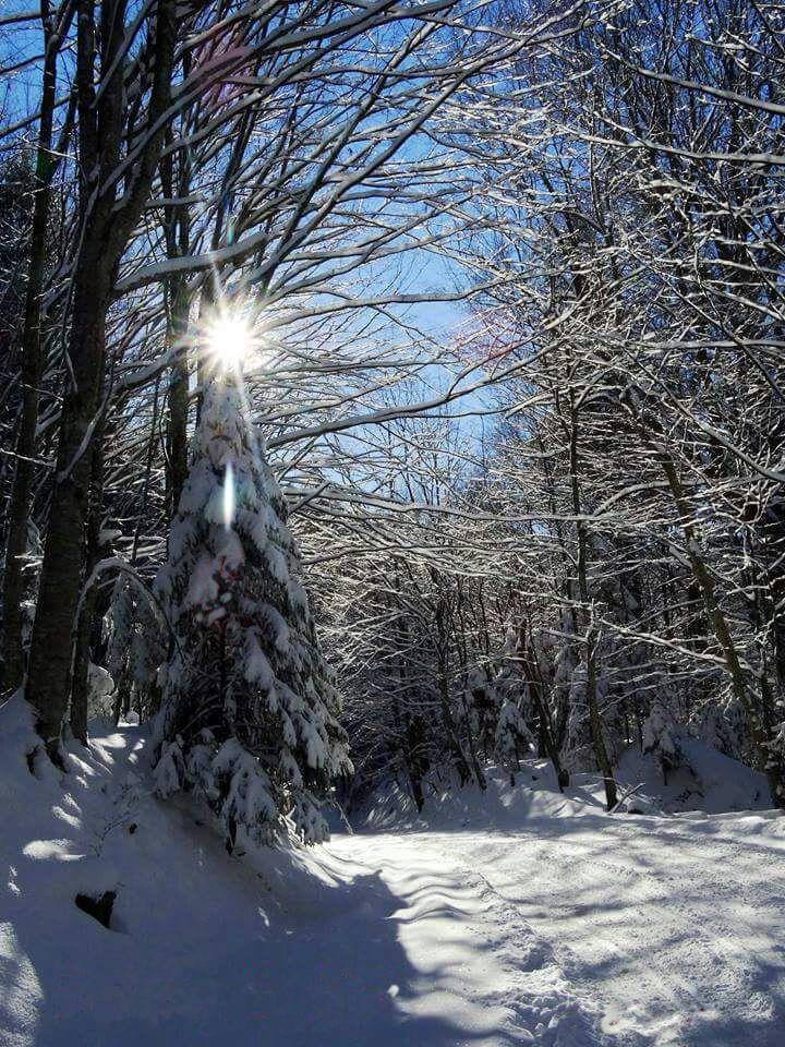 Mesajul Direcției Silvice Sibiu cu prilejul Sărbătorilor de iarnă