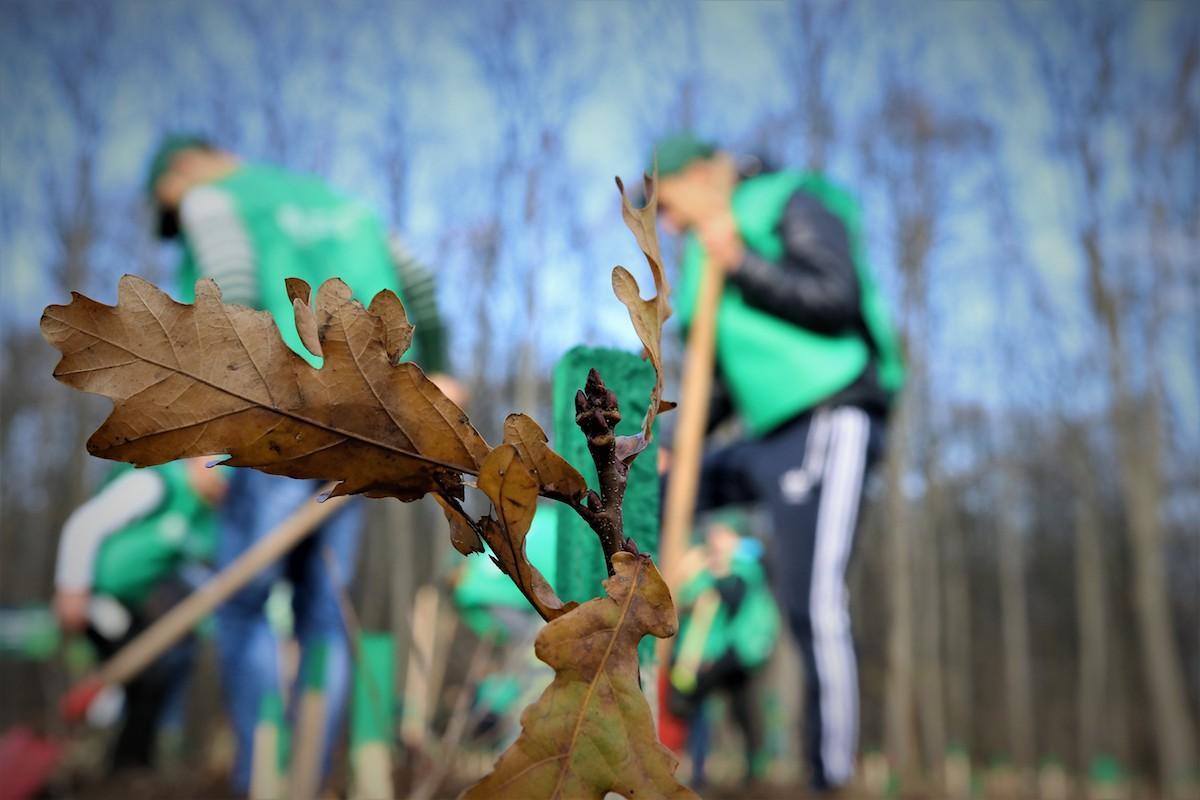 Romsilva plantează peste 3,5 milioane de puieți forestieri în campania de împăduriri de toamnă