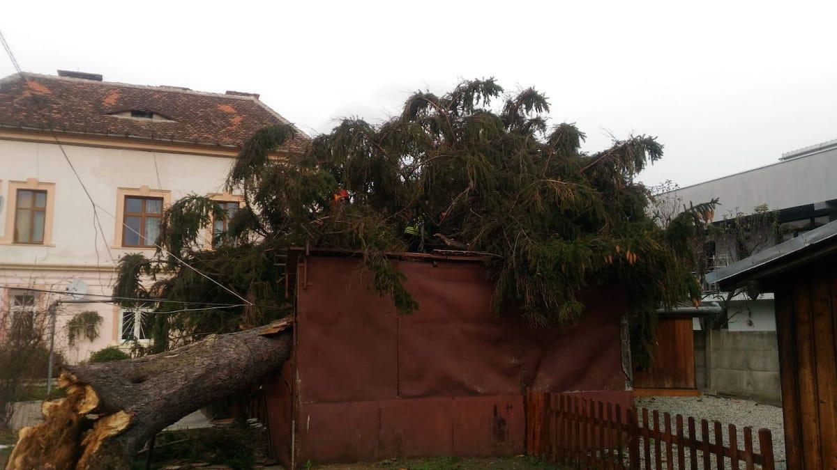 Un brad de 15 metri a căzut peste acoperișurile unor garaje