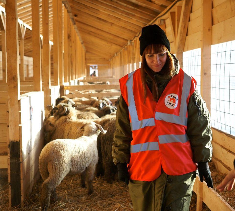 Cele 180 de oi salvate de pe nava scufundată în portul Midia, transferate la adăpostulARCA