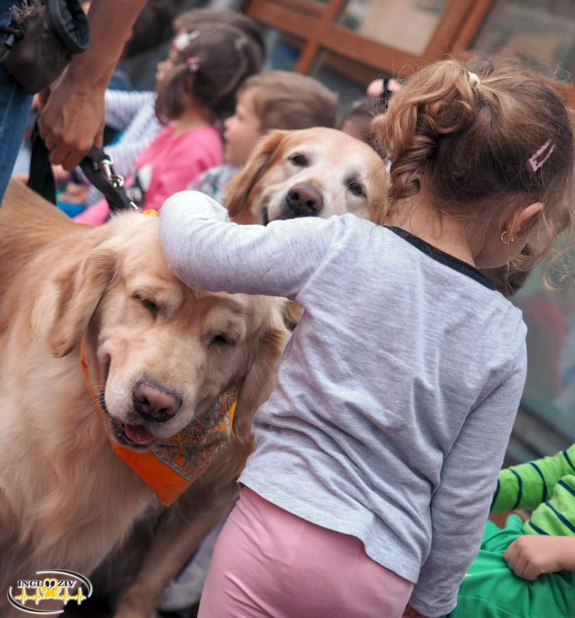 Asociația Incluziv, ONG-ul cu singura echipă om-câine de terapie asistată de animale