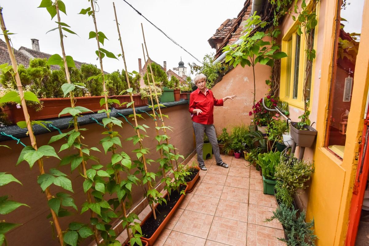 Balconul tău poate deveni grădină: principalii pași pe care trebuie să-i faci