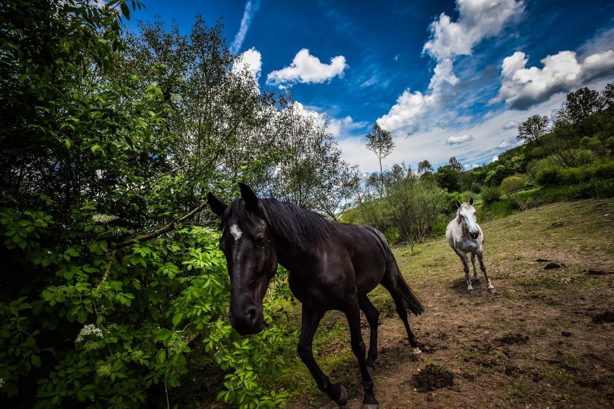 """UE pune Sibiul pe lista județelor în care e interzis exportul de cai. """"În două săptămâni nu vom mai avea probleme"""""""