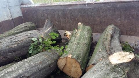 5 000 de lei amendă pentru tăierea unui copac. Au plecat la furat cu mașina, fără a avea permis