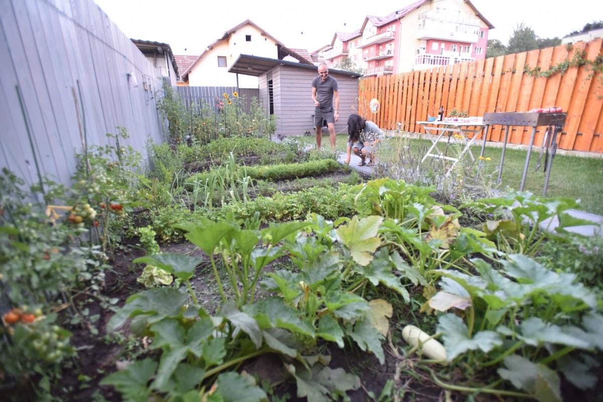 """VIDEO Cea mai frumoasă și sănătoasă grădină de la oraș. """"Un hobby care satisface și niște nevoi de alimentație"""""""