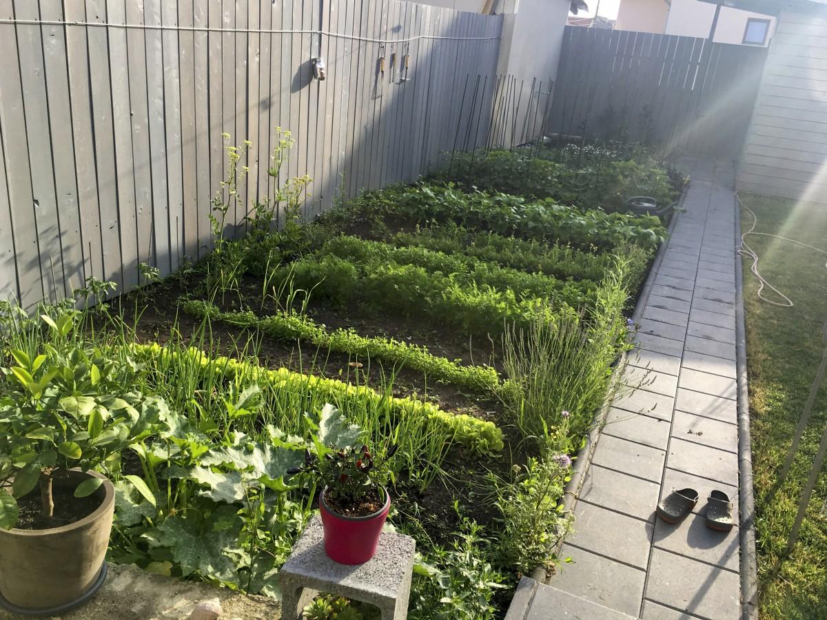 Grădina mea de la oraș poate fi atacată, dar și protejată: insectele dăunătoare și organismele utile
