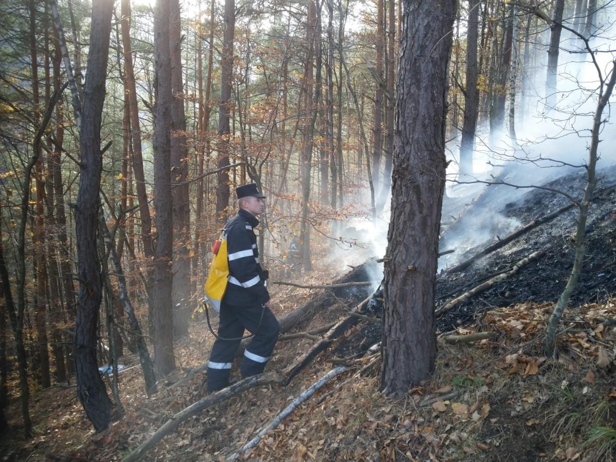 Pădurea de la Măgura arde iar. Incendiul se manifestă pe 1000 metri pătrați