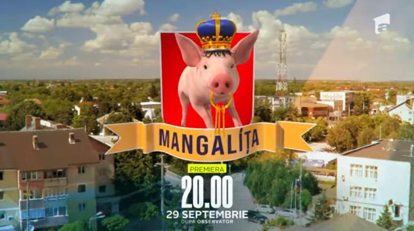 """VIDEO Mangalița - rasă de porc sauserial de comedie la Antena 1? Crescătorii se revoltă: """"Neafectează imaginea"""""""