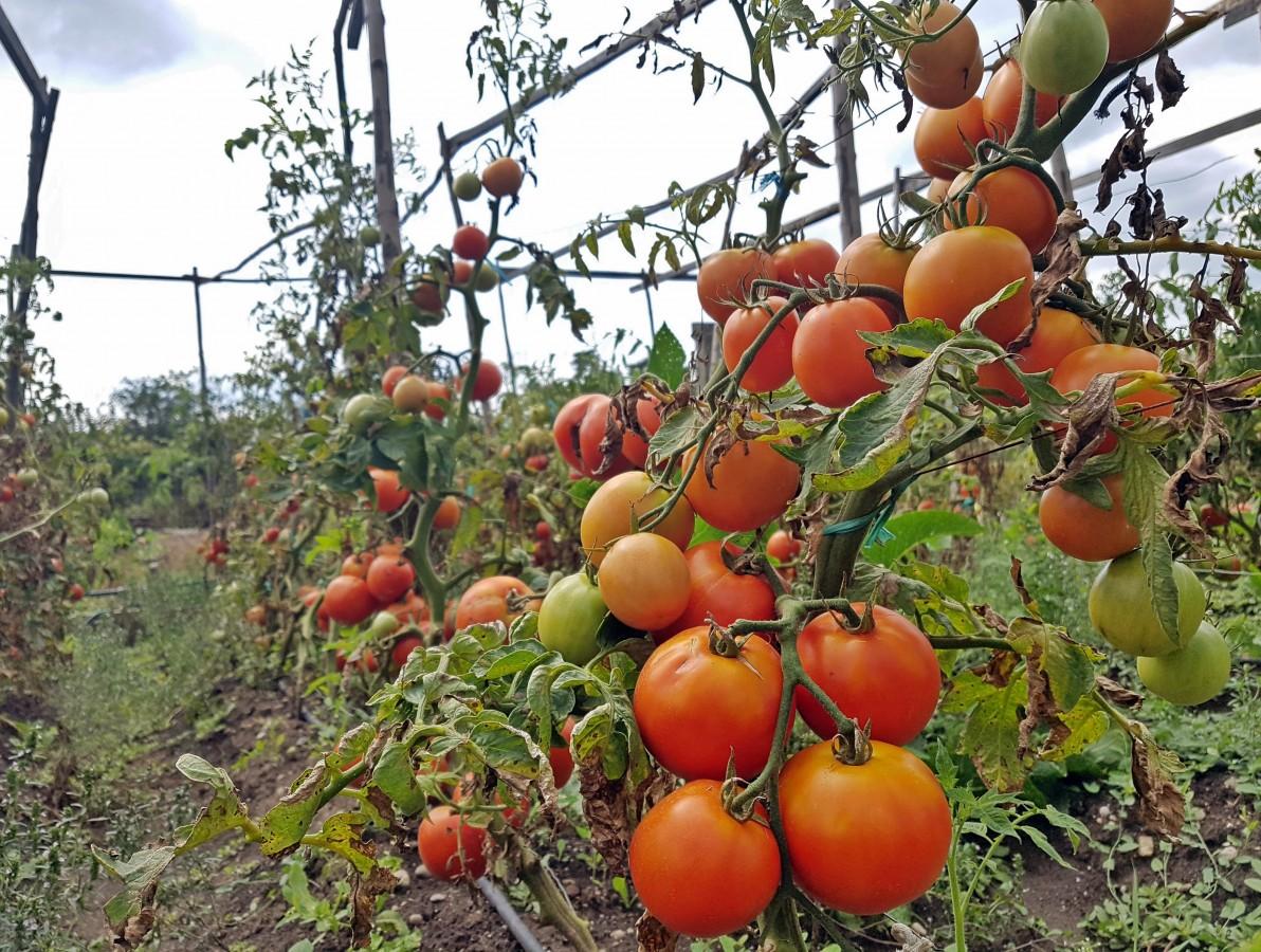 """Utilizarea culturilor mixte în grădină. Tabelul """"plantelor bune vecine"""""""