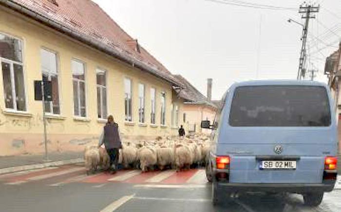 """VIDEO Sibiu, sat frumos! """"Am stat 20 de minute, la coadă, după oi!"""""""