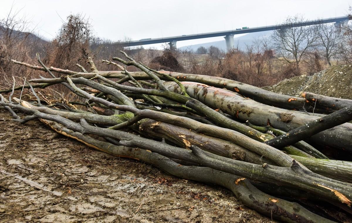 Oficial guvernamental: Sibiul este în top 3 județe cu cele mai mari furturi de lemne