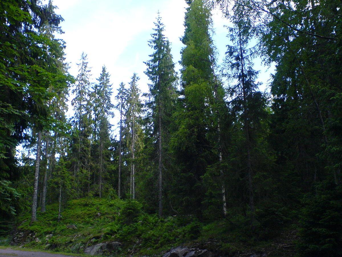 Bani europeni pentru pădurile Șelimbărului