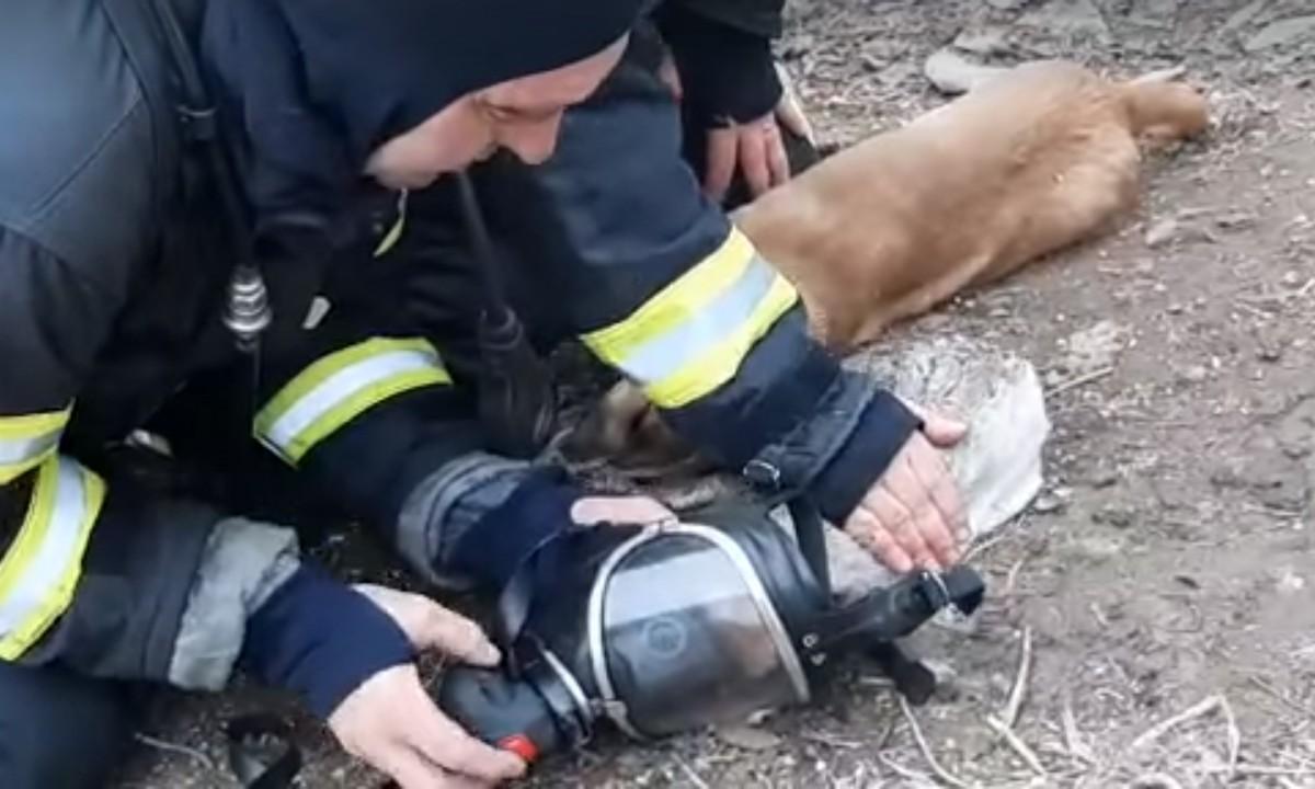 Video viral. Pompierii din Vrancea au salvat doi căței și o pisică intoxicați cu fum