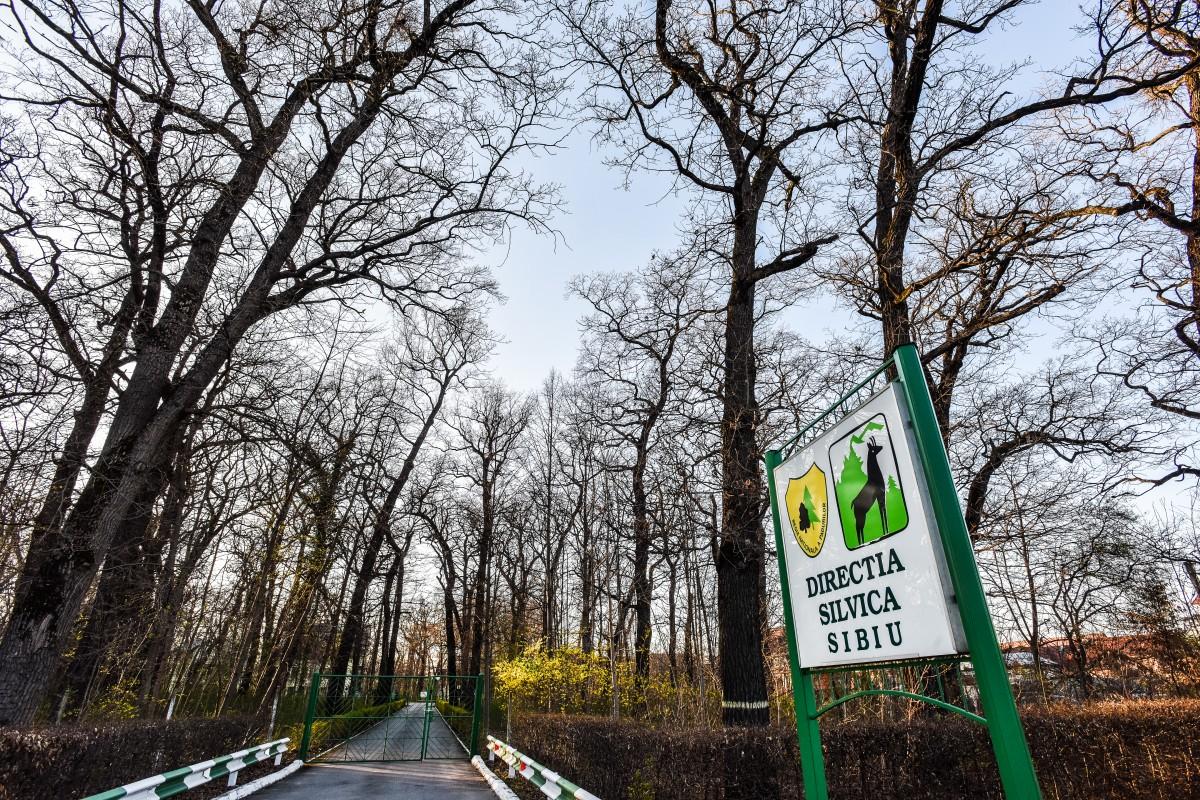 Anunț licitație publică - Direcția Silvică Sibiu