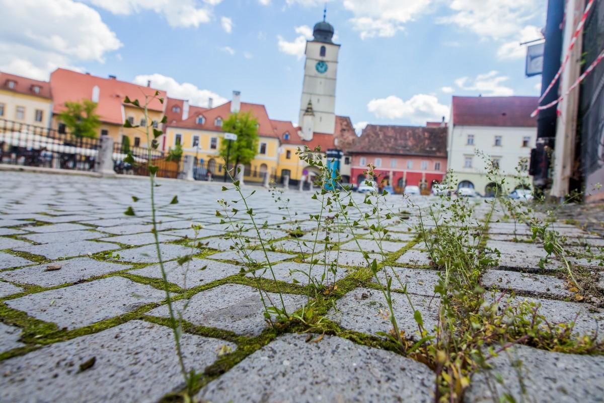 Continuă decolmatarea râului Cibin și a pârâurilor din Sibiu. Începe erbicidarea împotriva vegetației crescute în zonele pietonale pavate