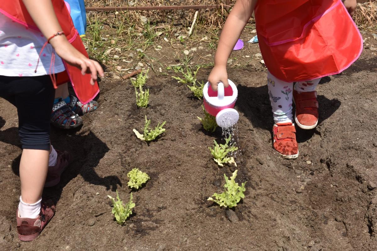 Grădina mea de la oraș. Pașii necesari pentru o grădină ecologică: rotația culturilor, stropitul și igiena culturilor