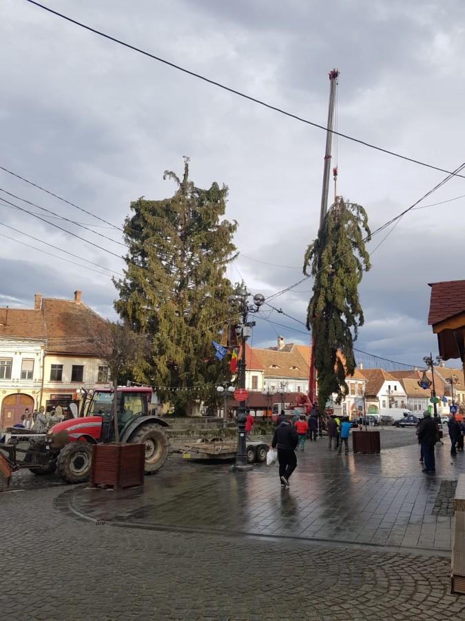 FOTO Bradul din Cisnădie s-a rupt din cauza vântului
