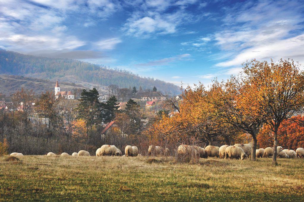 Mărginimea Sibiului premiată la Târgul de Turism al României