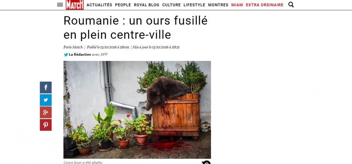 Ursul împușcat la Sibiu. De la Paris Match până la The New York Times șiThe Washington Post