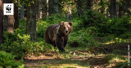 Ministerul Mediului a suspendat ordinul de ucidere a 1691 de urși, lupi și pisici sălbatice