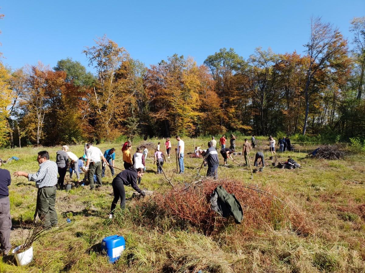 Membrii Rotary au participat la o acțiune de plantare puieți (CP)
