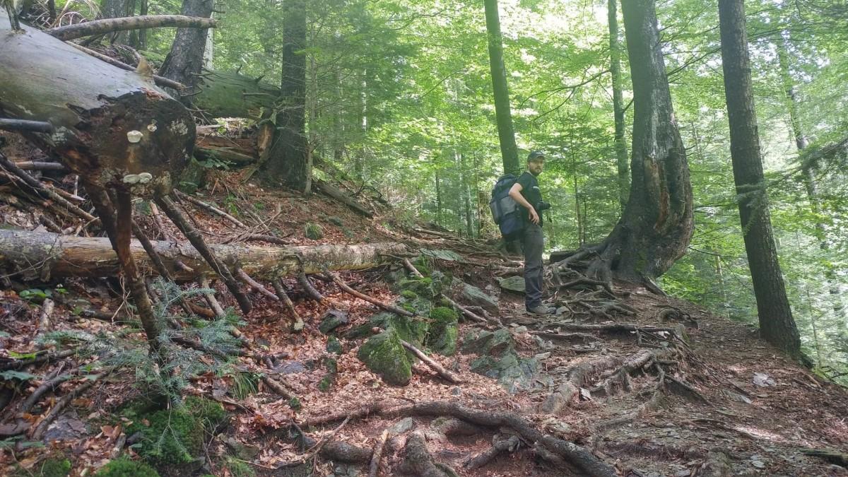 TS 10 ani. Cu cât a crescut suprafața împădurită a Sibiului, din 2009 până în prezent