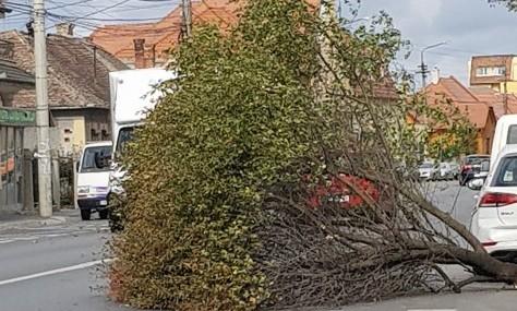 Rafale de vânt de aproape 70 km/h provoacă probleme în tot orașul | FOTO