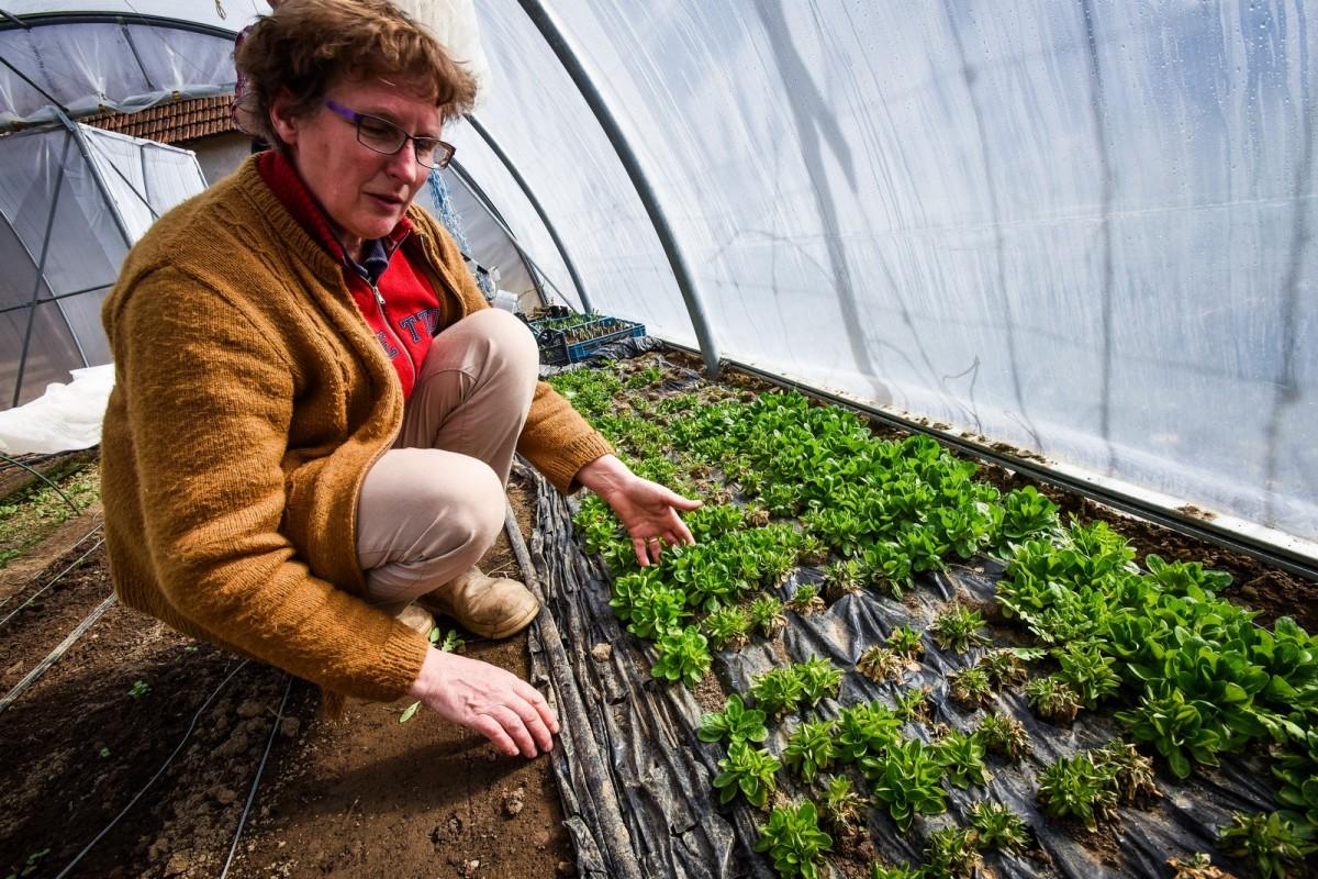 Lecție de agricultură de la o olandeză mutată într-un sat din Sibiu